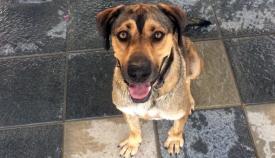 La desaparición de Pulgosas dejaría a muchos perros desamparados