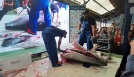 La iniciativa se ha inaugurado hoy con un ronqueo del atún