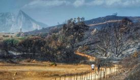 Un paraje de La Línea incendiado en el año 2016