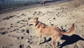 En Verdemar creen que Algeciras tiene kilómetros suficientes para una playa de perros