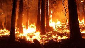 Los incendios están creando una alarma a nivel mundial