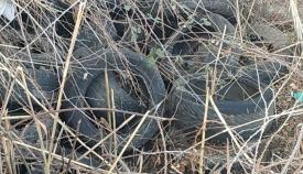 Neumáticos apilados. Foto: Verdemar