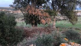 Imagen de la zona afectada, según denuncia Verdemar. Foto: NG