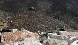 Imagen del lugar denunciado por los ecologistas. Foto Verdemar