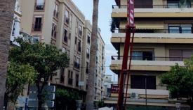 El Ayuntamiento fumiga las palmeras de Algeciras